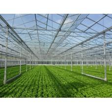Венло стакленик 17.500 m2